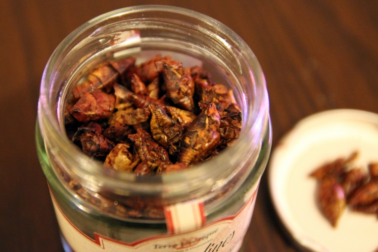 blog_cuisine_lyon_insectes_comestibles_terre_exotique_alice_delice_revelations_gourmandes