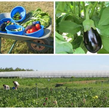 blog-Lyon-bonnes-adresses-bien-manger-cuisine-gastronomie-bio-ferme-legumes-fruits-cuillette