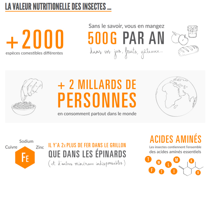 Insectes_manger_Granola_Jiminis_test_avis_infographie_proteine